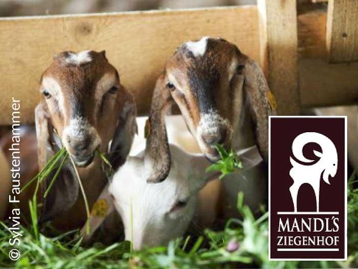 WALLI Kontakt Ausflugstipp Mandl's Ziegenhof